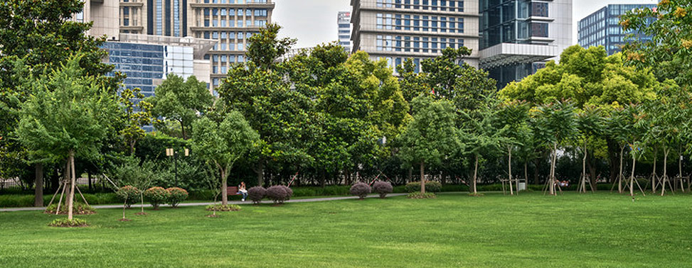 Public park near office buildings